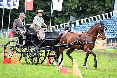 Morgan Finishes Strong at 2015 FEI World Driving Championships for Ponies