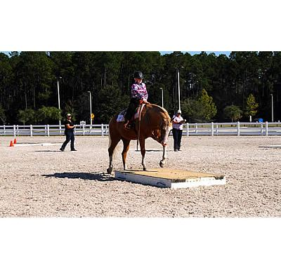 Greater Jacksonville Agricultural Fair 4-H & Open Horse Show Brings over 70 Riders