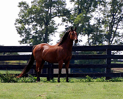 Stakes Winner Flick Euthanized at 24