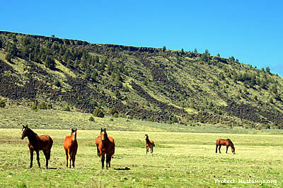 Tell Congress to Stop the Modoc Roundup! Fix It with a Fence!