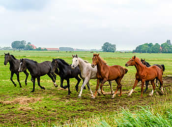 Understanding the Proposed Changes to the Horse Protection Act