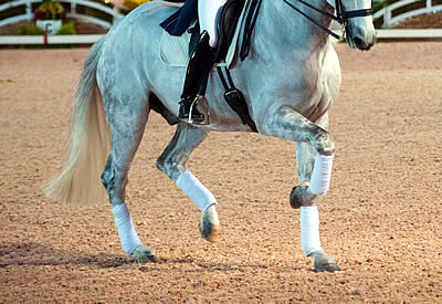 Palm Beach Series Schooling Dressage Announced for January 24
