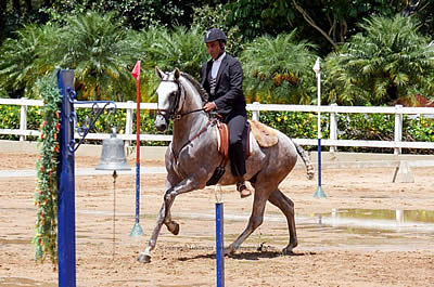 Generations of Interagro Talent Showcased at Brazilian Working Equitation Championships