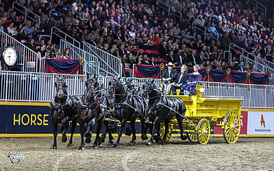 Blue Ribbon Days Percherons Named $25k Six-Horse Draft Champions at Royal Horse Show