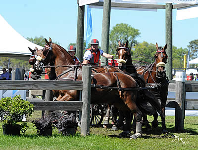 New Leaders Emerge Following Marathon in USEF Combined Driving National Championships