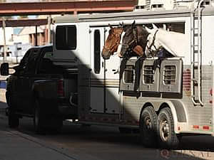 Getting Your Horse Loaded in the Trailer