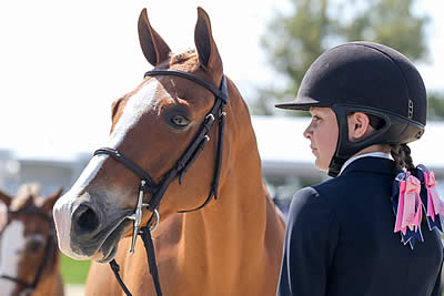 Southeast Medal Finals Adds Breeding Classes to 2018 Horse Show