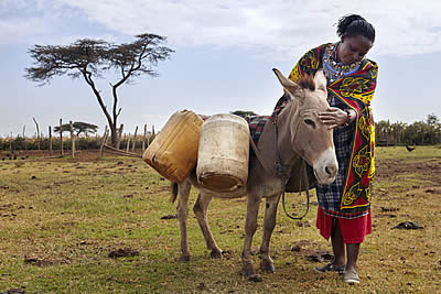 Women 4 Donkeys Match Campaign Funds Critical Equine Welfare Program in Kenya