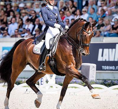 Verdades and Cobra Win at 2018 Horse of the Year Gala