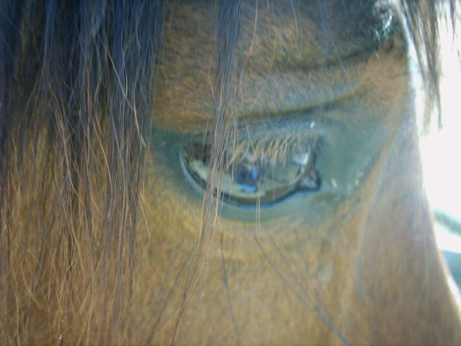 Horses, Seeds & Hummingbird Wings