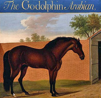 The Godolphin Arabian, painted by Thomas Butler.