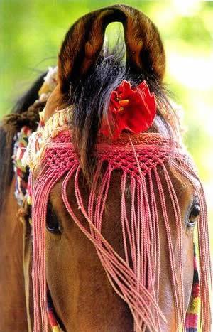 A Marwari horse in his traditional 'dancing' attire.