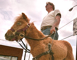 Miniature guide horse Cuddles pauses as a car turns while she and Dan train in Franklinton, North Carolina.