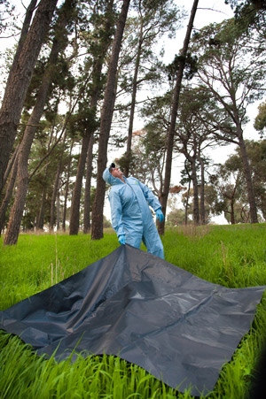 CSIRO's Dr Glenn Marsh, research scientist on the Cedar virus discovery team, collecting samples from underneath a bat colony.
