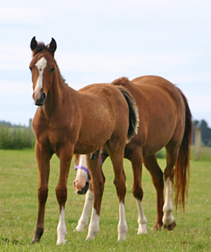 AI-foal