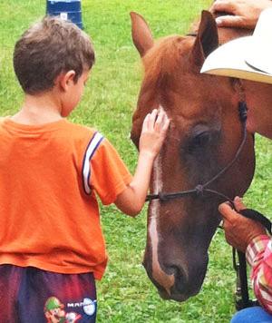 The Seraphim12 Foundation's horse ambassador, Chip.