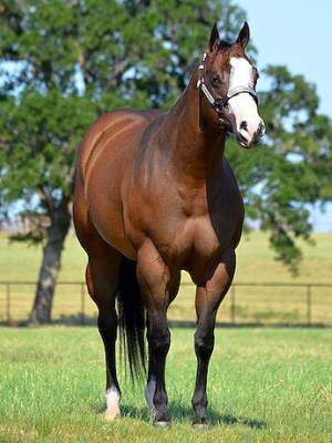 Sale topper I Execute Class, who fetched $US226,000.