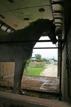 trailer-loading-oct2011