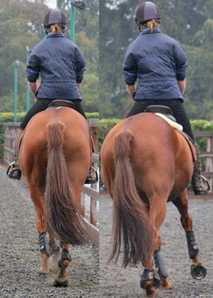 Researchers have found that saddle slip can be an indicator of hind limb lameness in some horses.