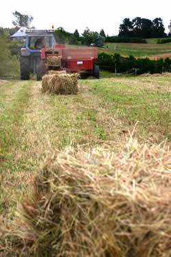 Baled and ready to go, but is it good enough for horses?