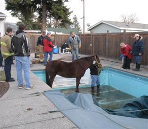 missy-pool-rescue3