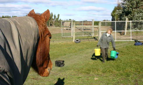 Bill And His Treatment From Broken Knees - Horsetalk.Co.Nz