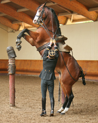 Dressage and high-school work create higher levels of stress in horses than the likes of jumping, eventing and vaulting.