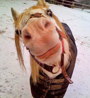 horse_puckering_lips
