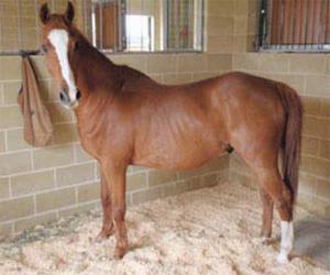 Kirribilli-horses2