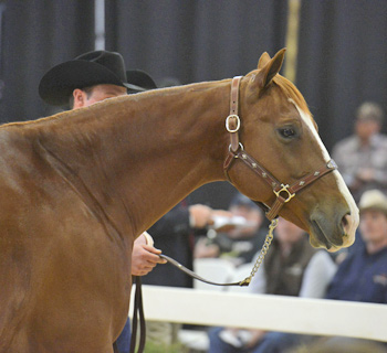 The high-selling older horse, Peptoplay, a 2004 sorrel gelding, was consigned by Cowan Select Horses.