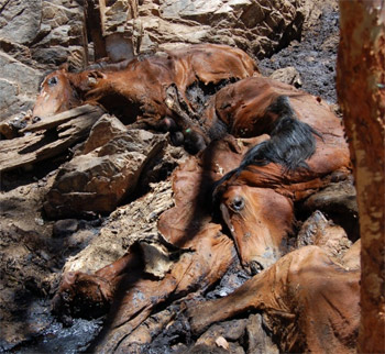 Horses dead at another water hole.