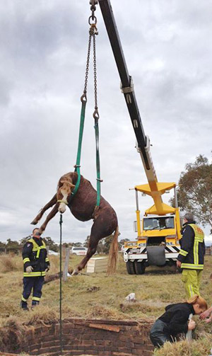 Fuzz the pony is hoisted out of the well after spending a night in the hole.