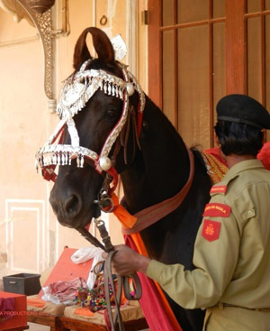 A Marwari Horse at Dundlod Fort Rajasthan India. The footage of Bonnie's dancing Marwari, shot at Dundlod Fort, is still a hit on You Tube to this day.