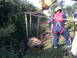 Firefighters come to the aid of a horse stuck fast in a ditch.