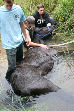 Rescuers prevent the exhausted horse from drowning as rescue preparations are made.