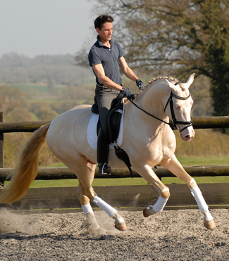 Kambarbay in dressage training with Matthew Burnett. The combination started affiliated competition  in April 2012.