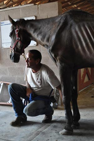 Peaceful Ridge Rescue president Victor Cutino looks at a black thoroughbred mare his employees named Lucky.