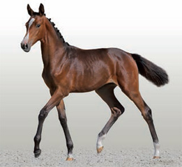 The sale-topping Cascadello I filly.