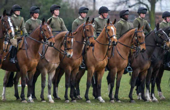 All the King's Horses: Penny served the military with distinction. Photo: World Horse Welfare