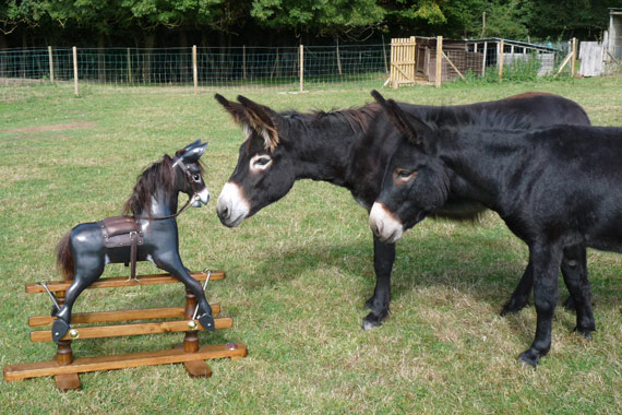 Two model donkeys who were the inspiration for the new Rocking Donkeys by Jolly Rockers.
