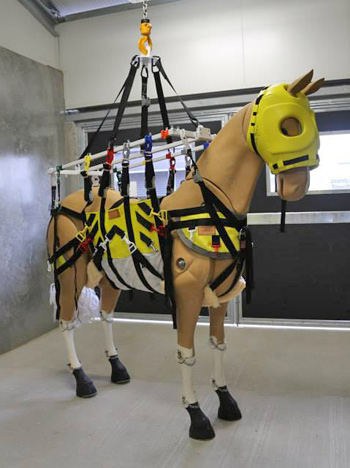 Special equipment at the new hospital includes a 1.6 tonne gantry unit for lifting horses.