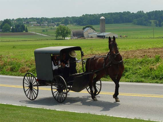 An Amish family rides in a traditional Amish buggy in Lancaster County, Pennsylvania. Photo: TheCadExpert/Wikipedia