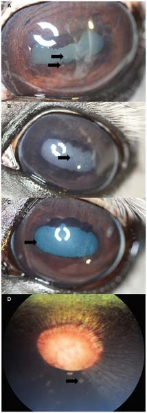 Ophthalmic findings of inflammatory origin.