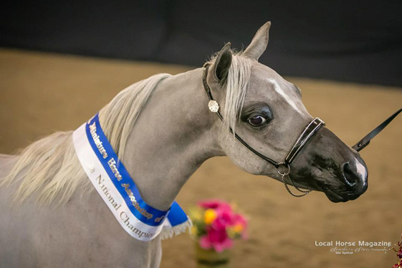 Jackson's AL Dralion was one of the horses killed last week.