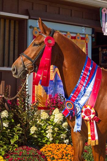 Friesian stud named USA's top dressage breeder - Horsetalk co nz