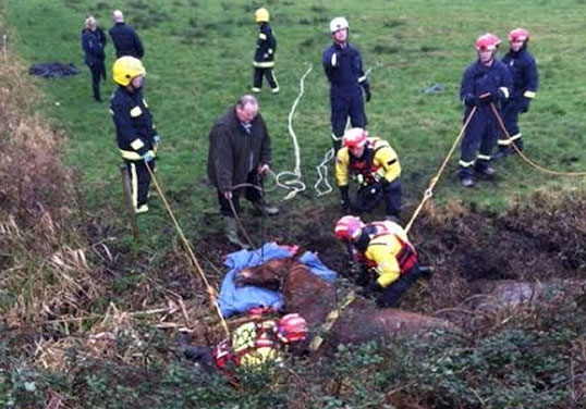 Firefighters and passers-by help get Ears out of the ditch.