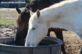 Providing horses with ready access to fresh water and a healthy diet, with sufficient space to move and the ability to socialize with others, goes a long way towards a happy and healthy horse.