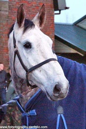 First off the truck at The Horse Trust was Joey, the youngest of the four at eight. The 16.3hh dapple grey gelding had been training with the police for two years.