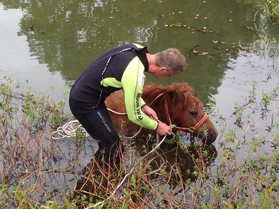 The pony is prepared for rescue. Photo: Richmond Local Area Command/Facebook