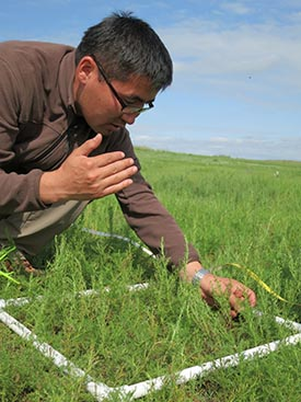 More rainfall means more grass, which would mean more war horses for the Mongol cavalry. Ecologist Byambasurem Oyunsanaa plots plant abundance on the modern steppe. Photo: Kevin Krajick, The Earth Institute, Colombia University